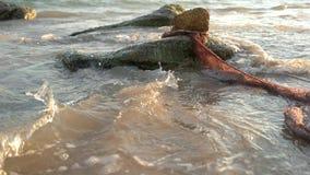 Vissen in de zegen op het strand stock footage