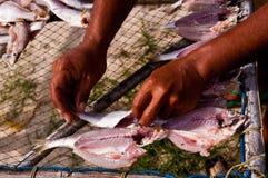 Vissen die in de zon drogen Royalty-vrije Stock Foto