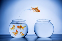 Vissen die gelukkig springen Stock Foto