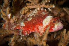 Vissen die in het zand verbergen Royalty-vrije Stock Foto's