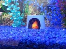 Vissen die in huis verbergen Stock Foto's