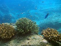 Vissen die in koraalrif zwemmen stock fotografie