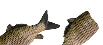 Vissen die op beschikbare white royalty-vrije stock fotografie