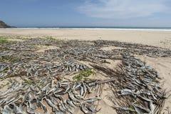 Vissen die op het zand op de overzeese kust drogen Royalty-vrije Stock Foto