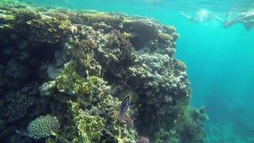 Vissen die rond koralen en mensen zwemmen naar stock footage