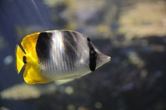 Vissen die terug eruit zien Stock Foto's