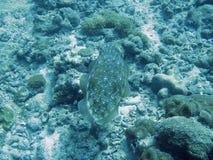 Vissen die in tropische ertsader zwemmen stock foto