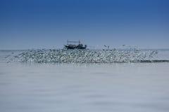 Vissen die uit water springen Stock Afbeelding