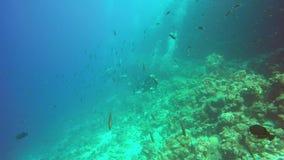 Vissen die vanaf duikers lopen stock videobeelden