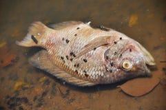 Vissen die volkomen drijven Stock Afbeeldingen