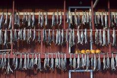 Vissen die worden gehangen om te drogen Stock Foto's