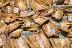 Vissen die in zon Thailand drogen stock fotografie