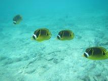 Vissen in diep Royalty-vrije Stock Afbeelding