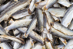 Vissen Droog Voedsel Royalty-vrije Stock Foto