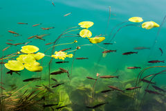 Vissen in duidelijk water stock foto's