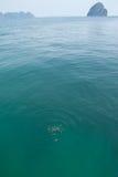 Vissen in duidelijk water. Royalty-vrije Stock Fotografie