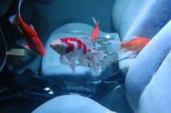 Vissen in een auto Royalty-vrije Stock Fotografie