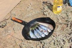 Vissen in een pan Stock Afbeeldingen