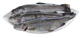 Vissen in een Schotel Royalty-vrije Stock Foto's