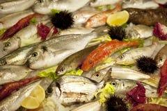 Vissen in een teller Royalty-vrije Stock Afbeelding