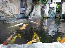 Vissen in een vijver stock foto's