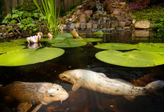 Vissen in een vijver Royalty-vrije Stock Afbeeldingen