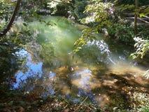Vissen in een vijver in Parco Aymerich in Laconi, Sardinige, Italië Stock Foto