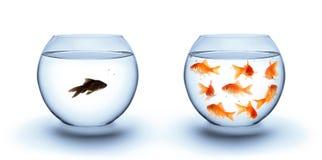 Vissen in eenzaamheid - diversiteitsconcept, racisme en isolatie Stock Afbeeldingen