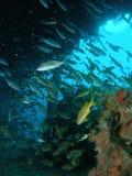 Vissen en een Wrak stock afbeelding
