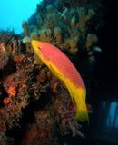 Vissen en een Wrak royalty-vrije stock afbeelding