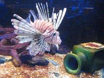 Vissen en fles Royalty-vrije Stock Afbeeldingen