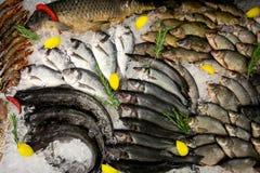 Vissen en garnalen op de teller op ijs Royalty-vrije Stock Afbeelding