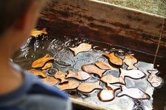 Vissen en jong geitje Stock Foto's