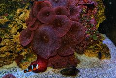 Vissen en koraal stock foto's