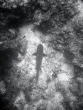 Vissen en koraalrif Stock Foto's