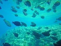 Vissen en koralen in het overzees Royalty-vrije Stock Foto's