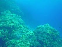 Vissen en koralen in het overzees Stock Fotografie