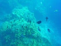 Vissen en koralen in het overzees Stock Afbeeldingen