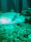 Vissen en overzeese bodem Royalty-vrije Stock Foto's