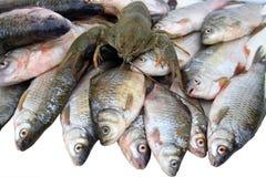 Vissen en rivierkreeften Royalty-vrije Stock Fotografie