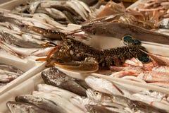 Vissen en zeekreeft Stock Foto's