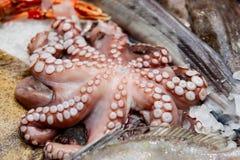 Vissen en zeevruchten op de vertoning van de vissenmarkt Stock Foto's