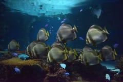 Vissen in het aquarium Royalty-vrije Stock Afbeeldingen