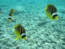 Vissen in het Blauw Royalty-vrije Stock Afbeeldingen