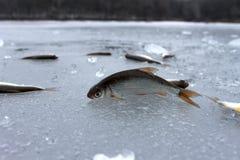 Vissen in het de winterijs dat worden gevangen Royalty-vrije Stock Fotografie