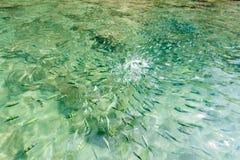 Vissen in het overzees van Thailand, krabioverzees royalty-vrije stock afbeelding