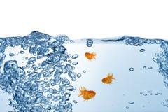 Vissen in het water Stock Afbeelding