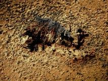 Vissen in het zand royalty-vrije stock foto