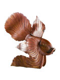 Vissen houten standbeeld Stock Foto's