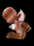 Vissen houten standbeeld Stock Foto